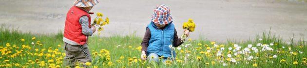 pick-flowers-785111_1280