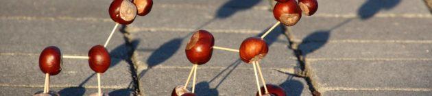 chestnut-animal-2392588_1920
